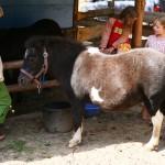 Besuch bei Pony und Esel
